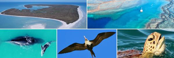 Adele Island - Unprotected