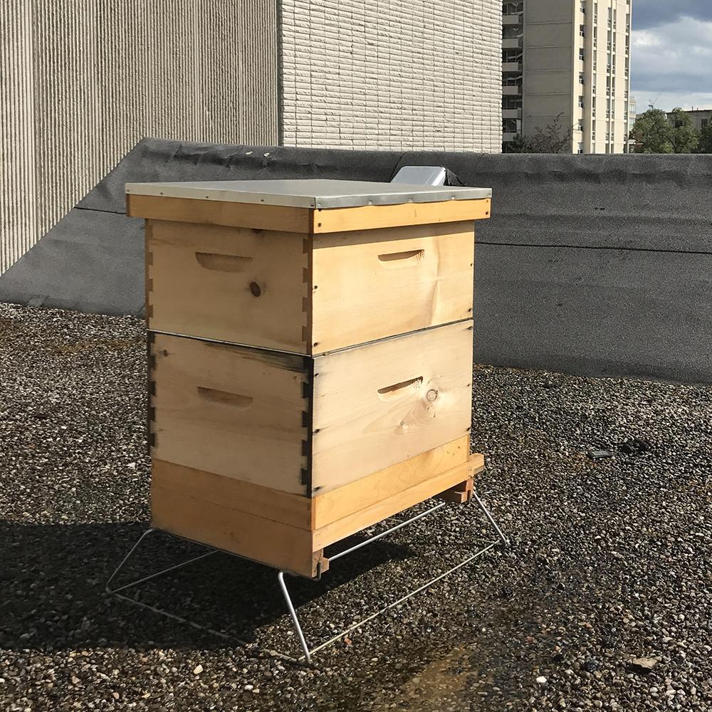 Bees_1.jpg