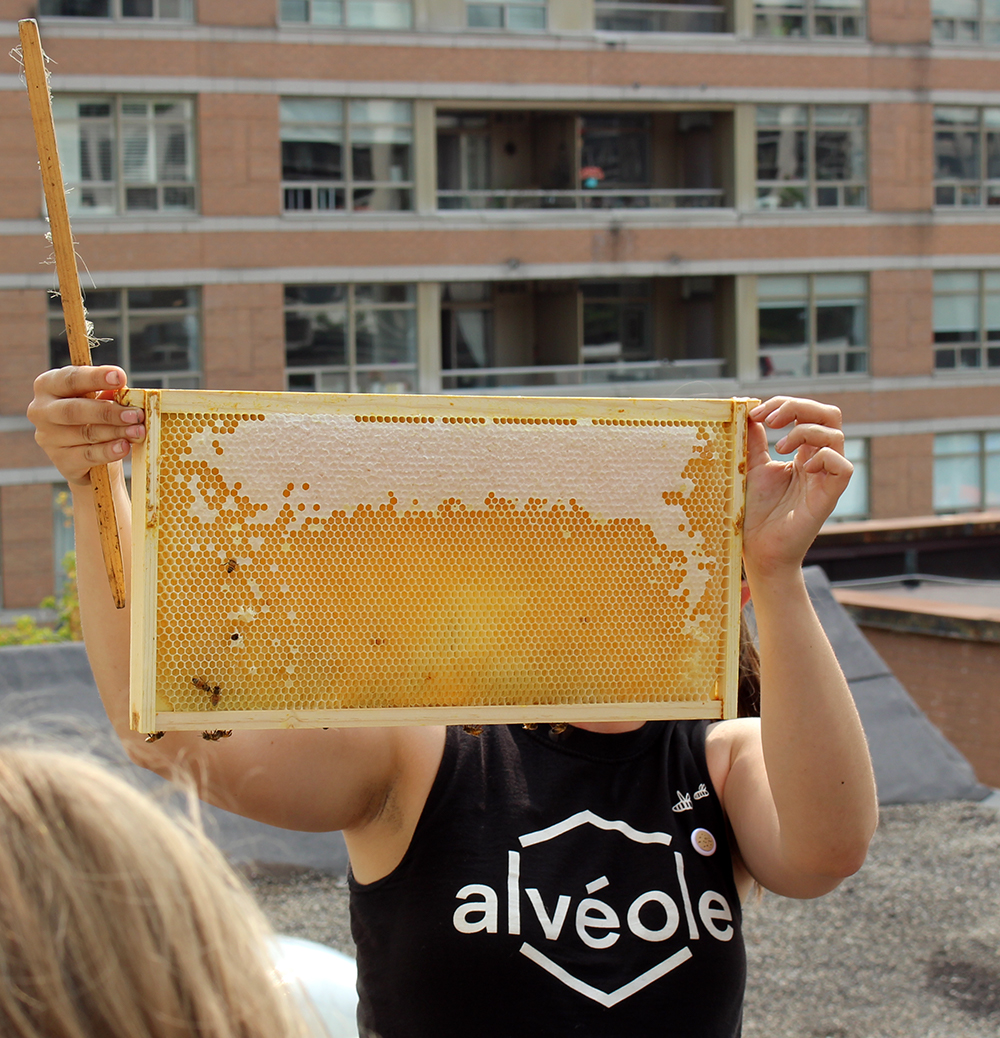 Honey_Harvest_1.jpg
