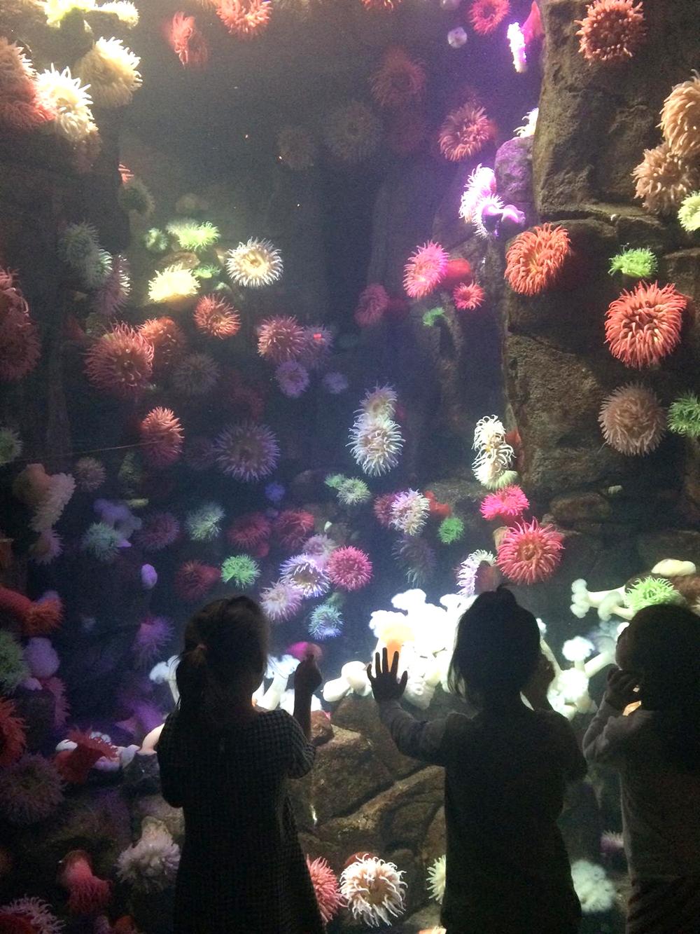 acquarium.jpg