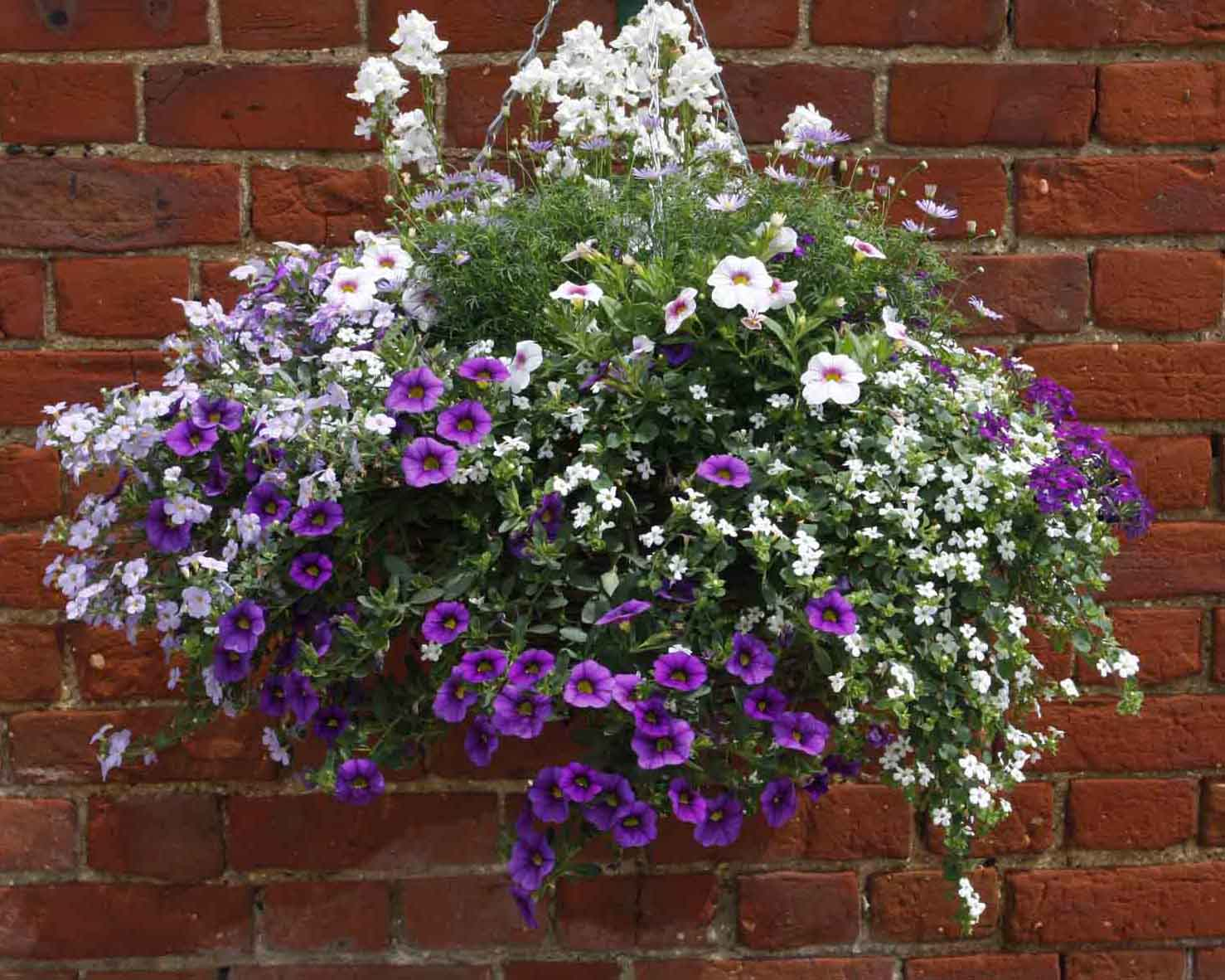 Blueberry-Hanging-Basket-Grown-by-Green-Pastures.jpg