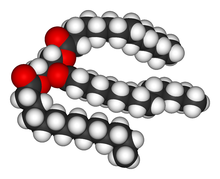 triglyceride1.png