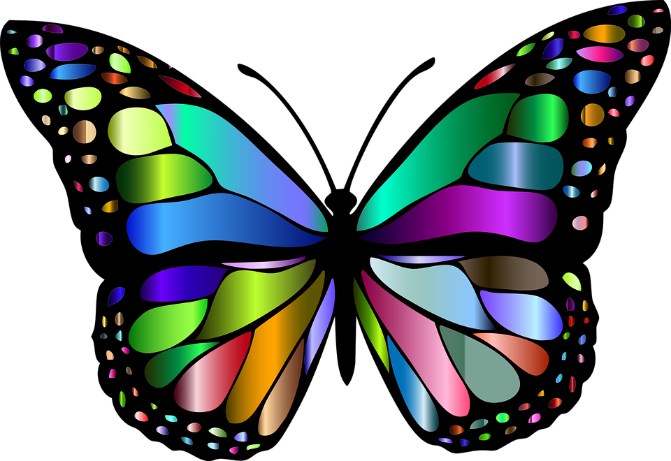 Butterfly-Insect-Chromatic-Animal-Colorful-Flying-1769728.png