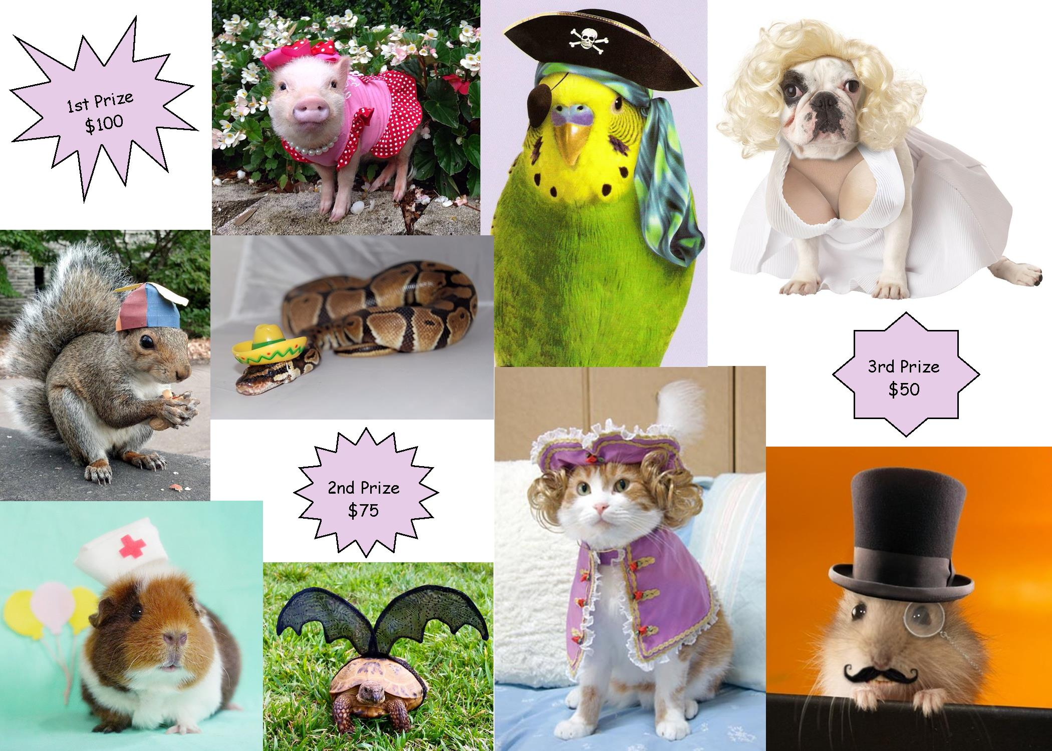 Pet_Costume_Graphic.jpg