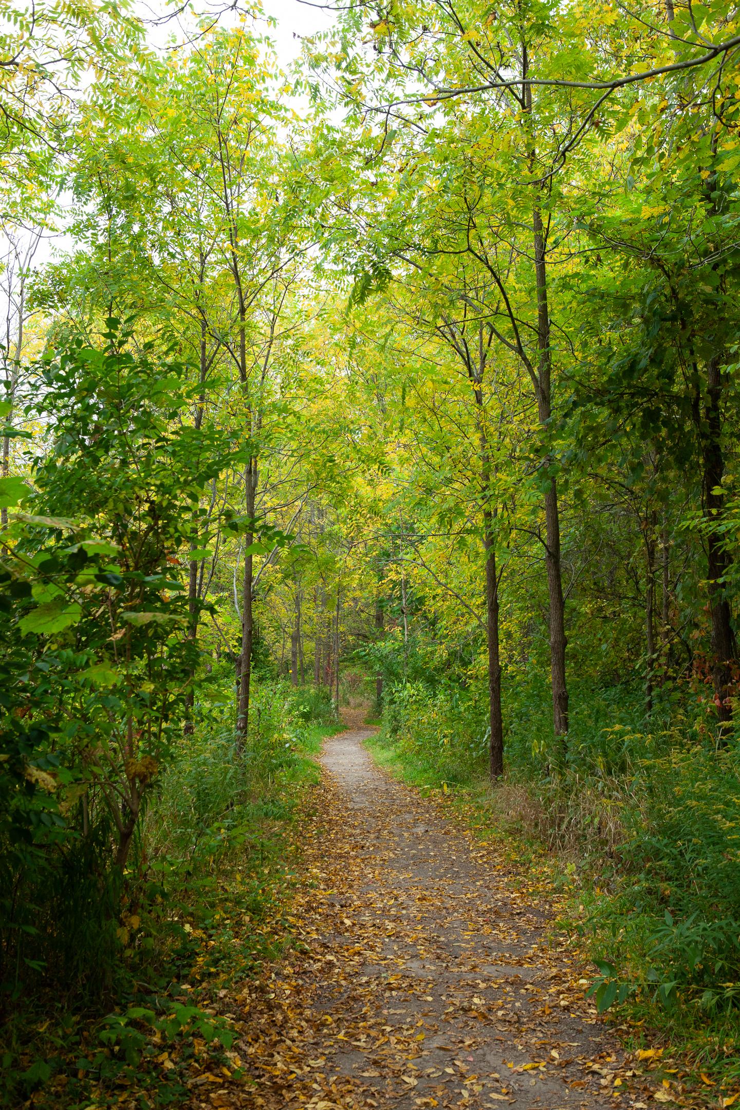 Pond Mills Path