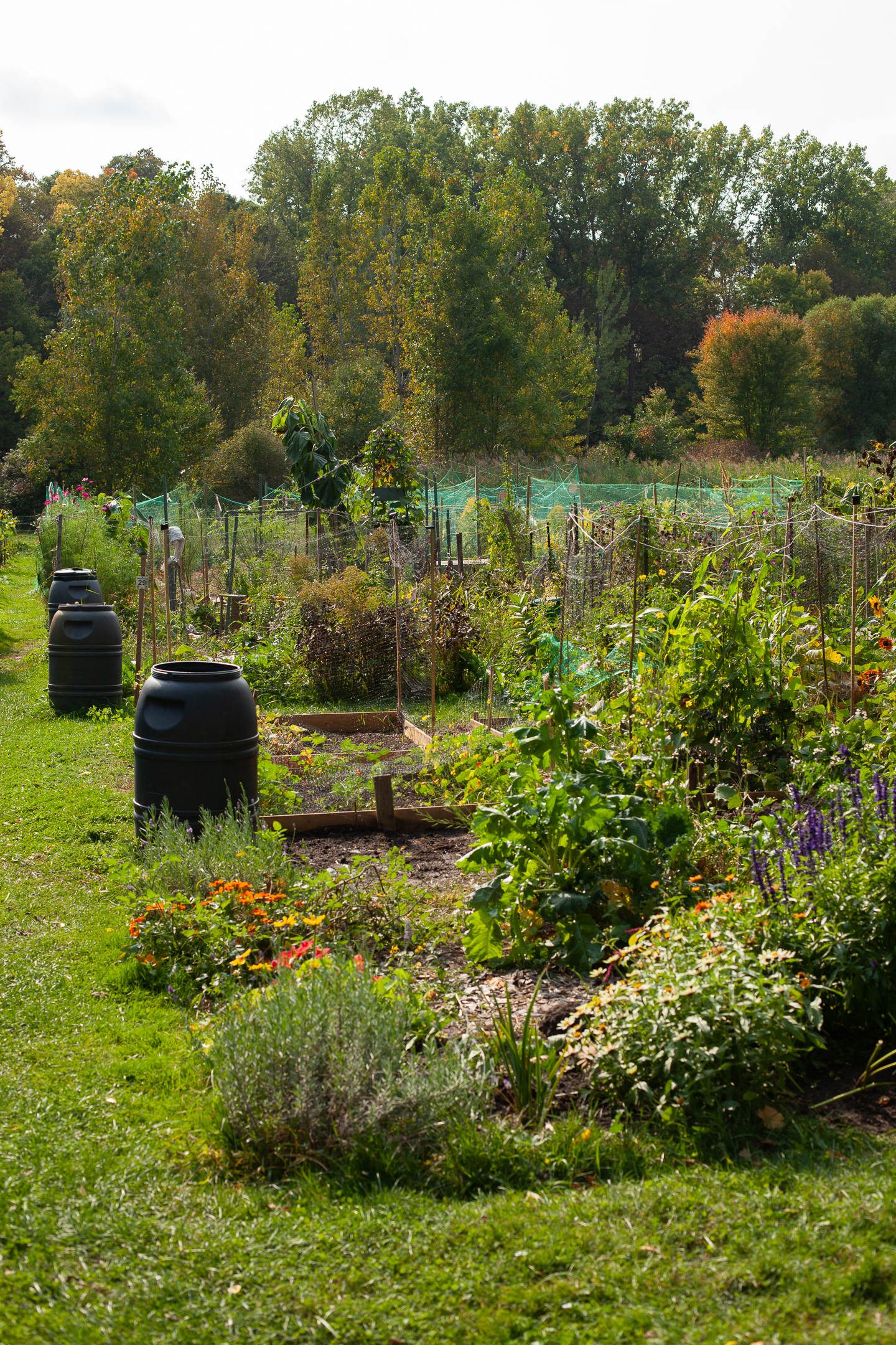 Whole view of Community garden