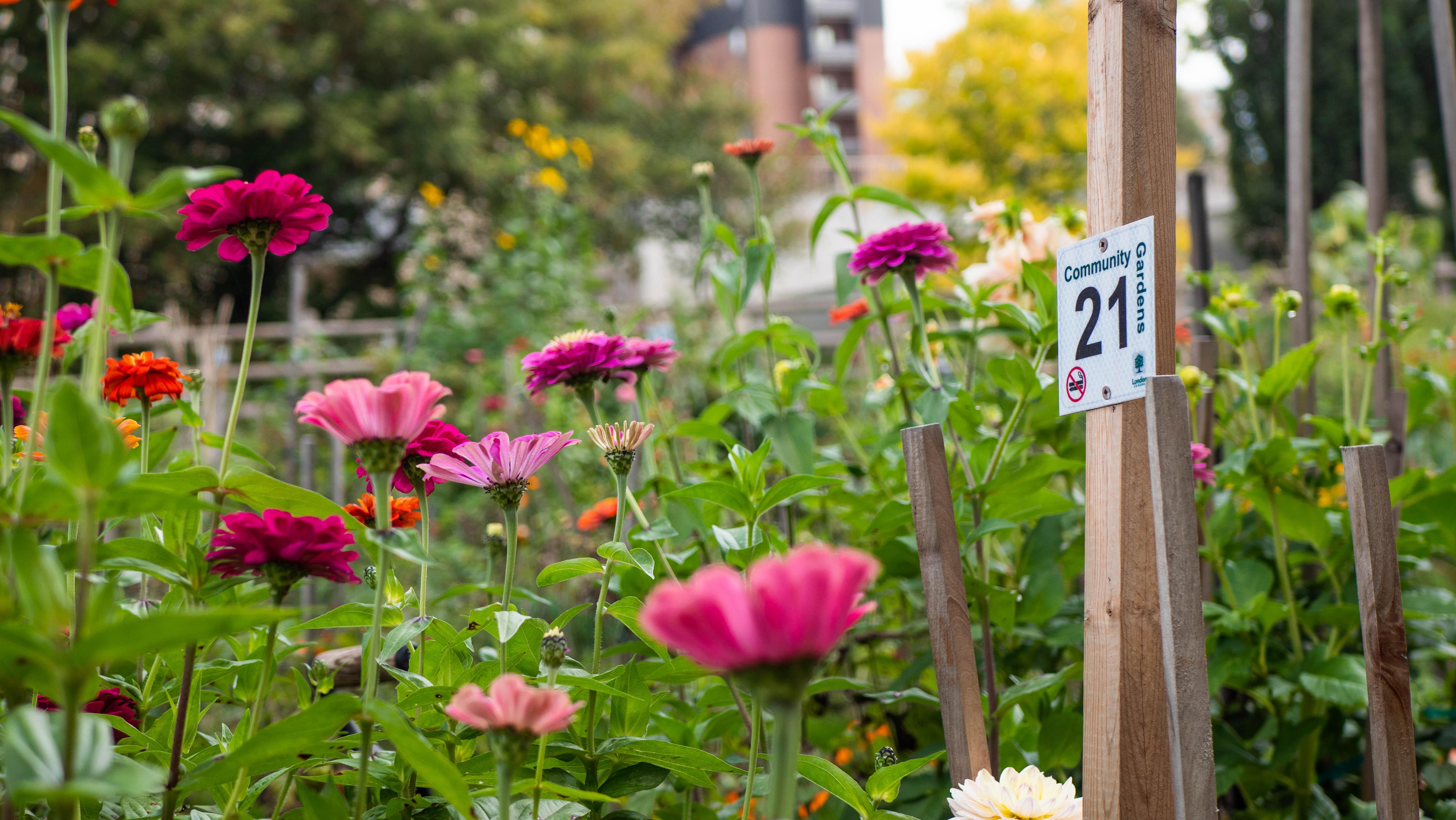 Flowers growing in a community garden