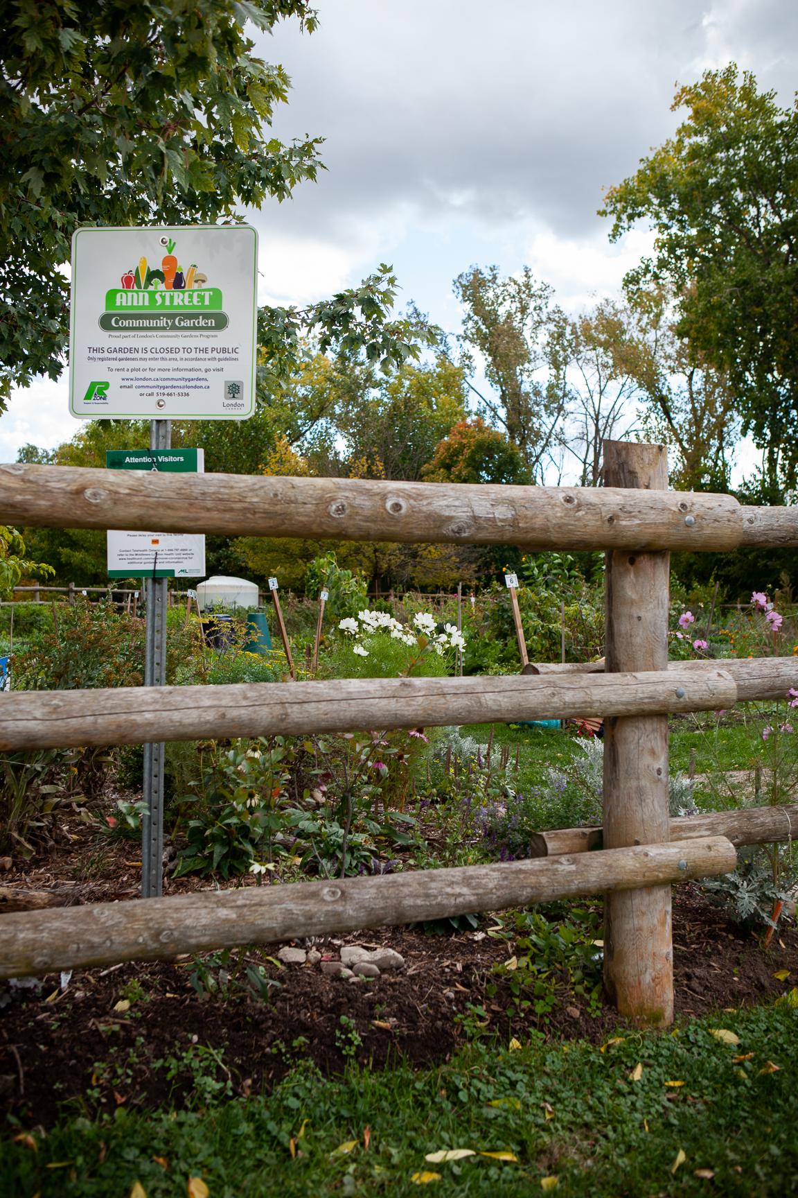 Community garden on Ann St., London, Ont