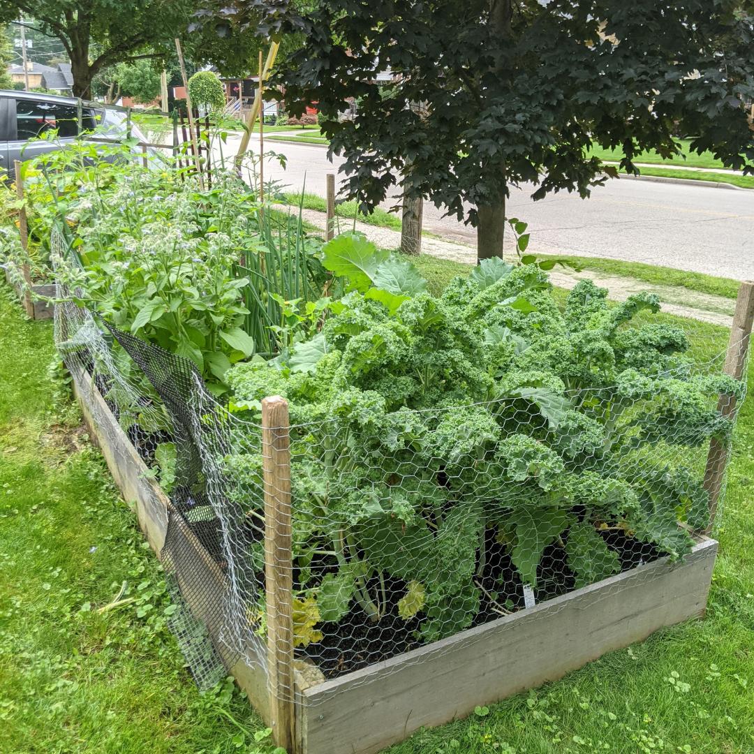 Raised Garden Bed Full with Vegetables