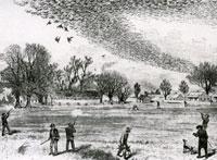 Passenger Pigeon, 3