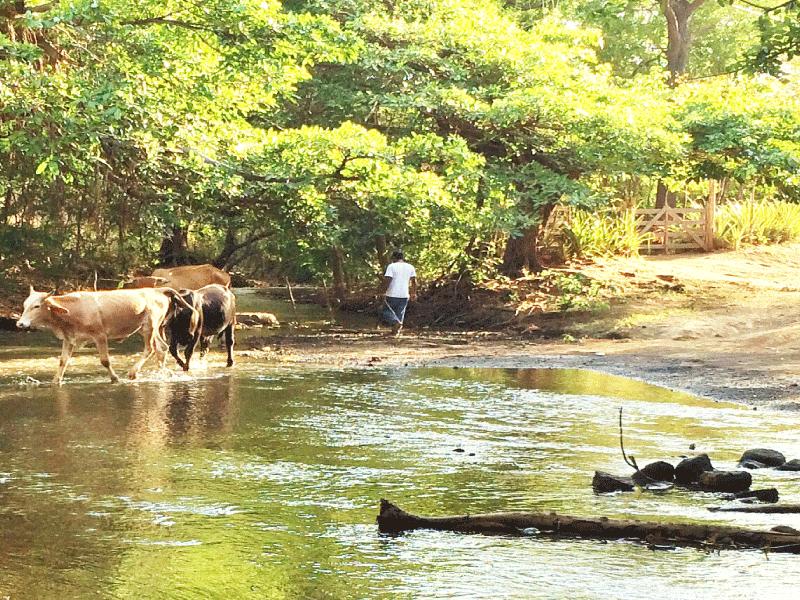 Love Water Nicaragua