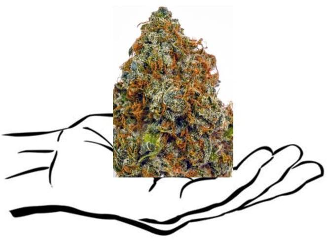 cannabis_bud2-page-001.jpg