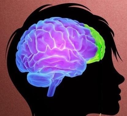 teen_brain_r_LI_(2).jpg
