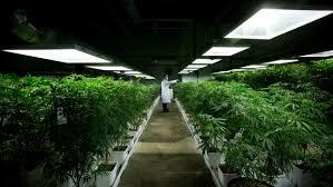 mj_grow_indoor.jpg