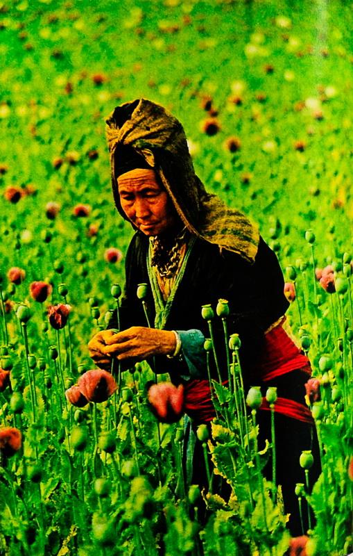 hmong_opium.jpg