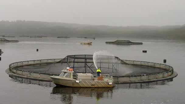 Fish farming action
