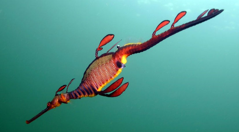 Seadragon-web.jpg