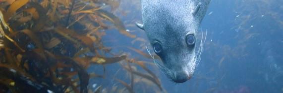 Help us protect our precious marine life