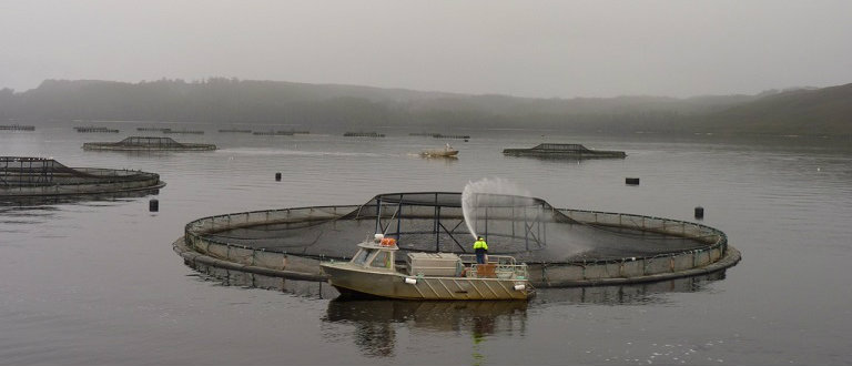 Salmon Nets in Strahan
