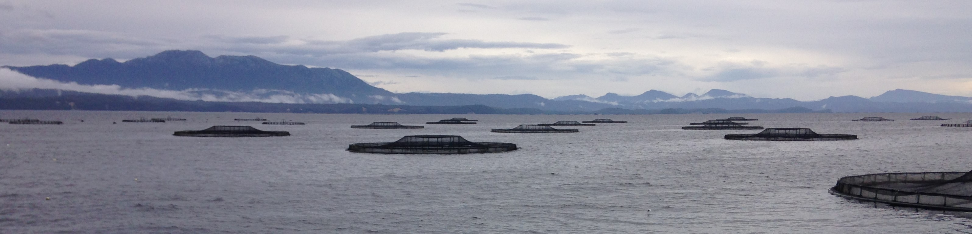 Macquarie Harbour - farming in a dead zone
