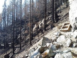 Severely burned area along forest trail