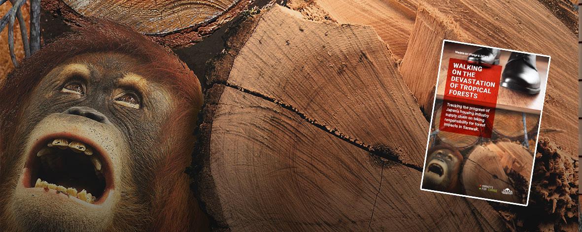 walking-on-forest-destruction.jpg