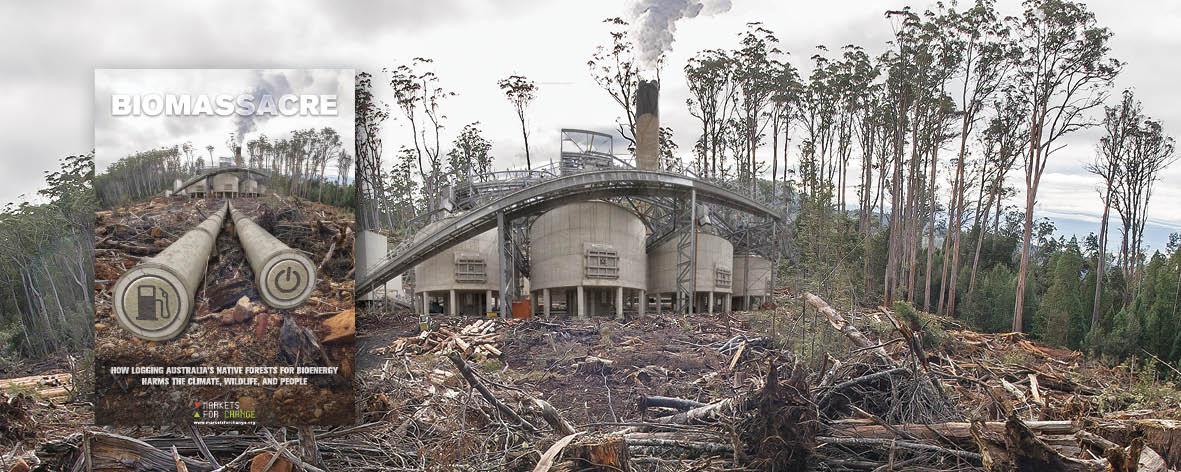 biomassacre_report_banner.jpg