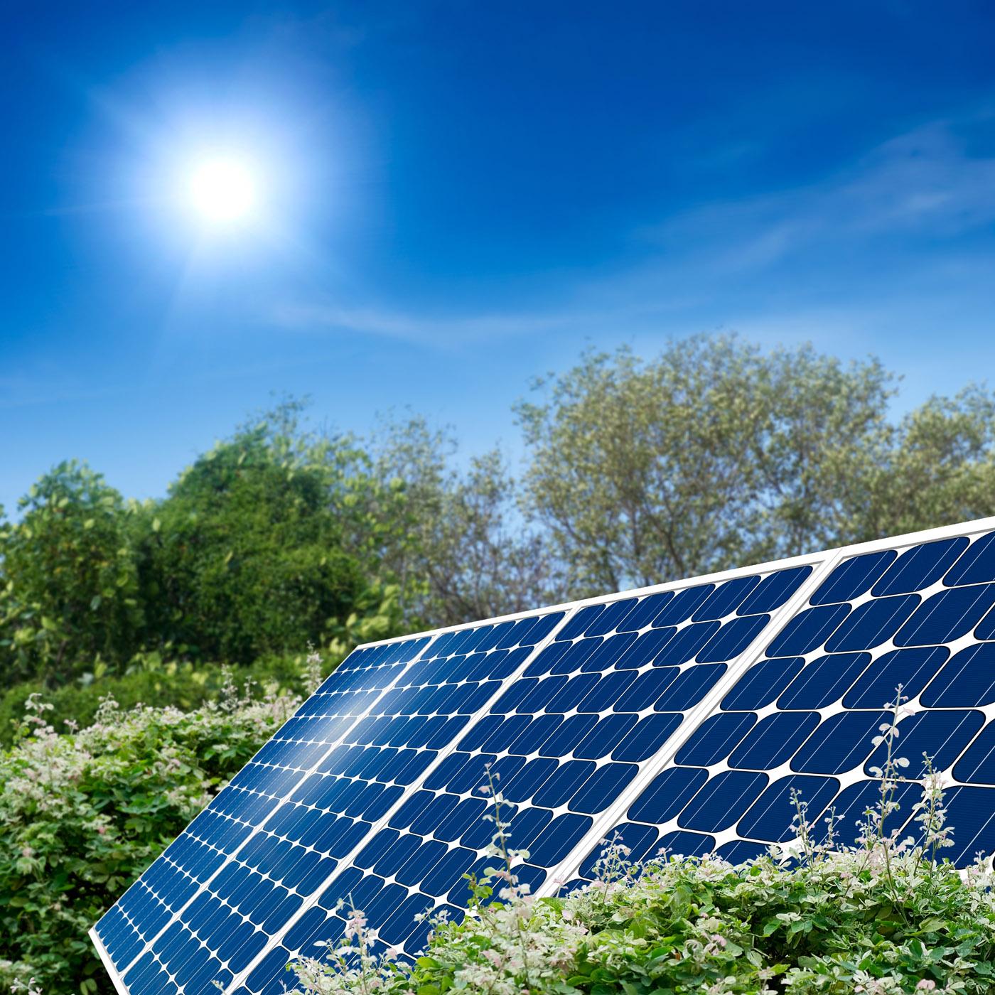 SolarPanelsFlowers.jpg