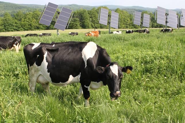 4-SolarCow2.jpg.644x0_q70_crop-smart.jpg