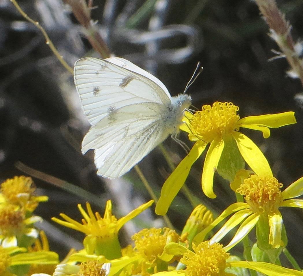 butterfly_on_flowers_–_Version_2.jpg
