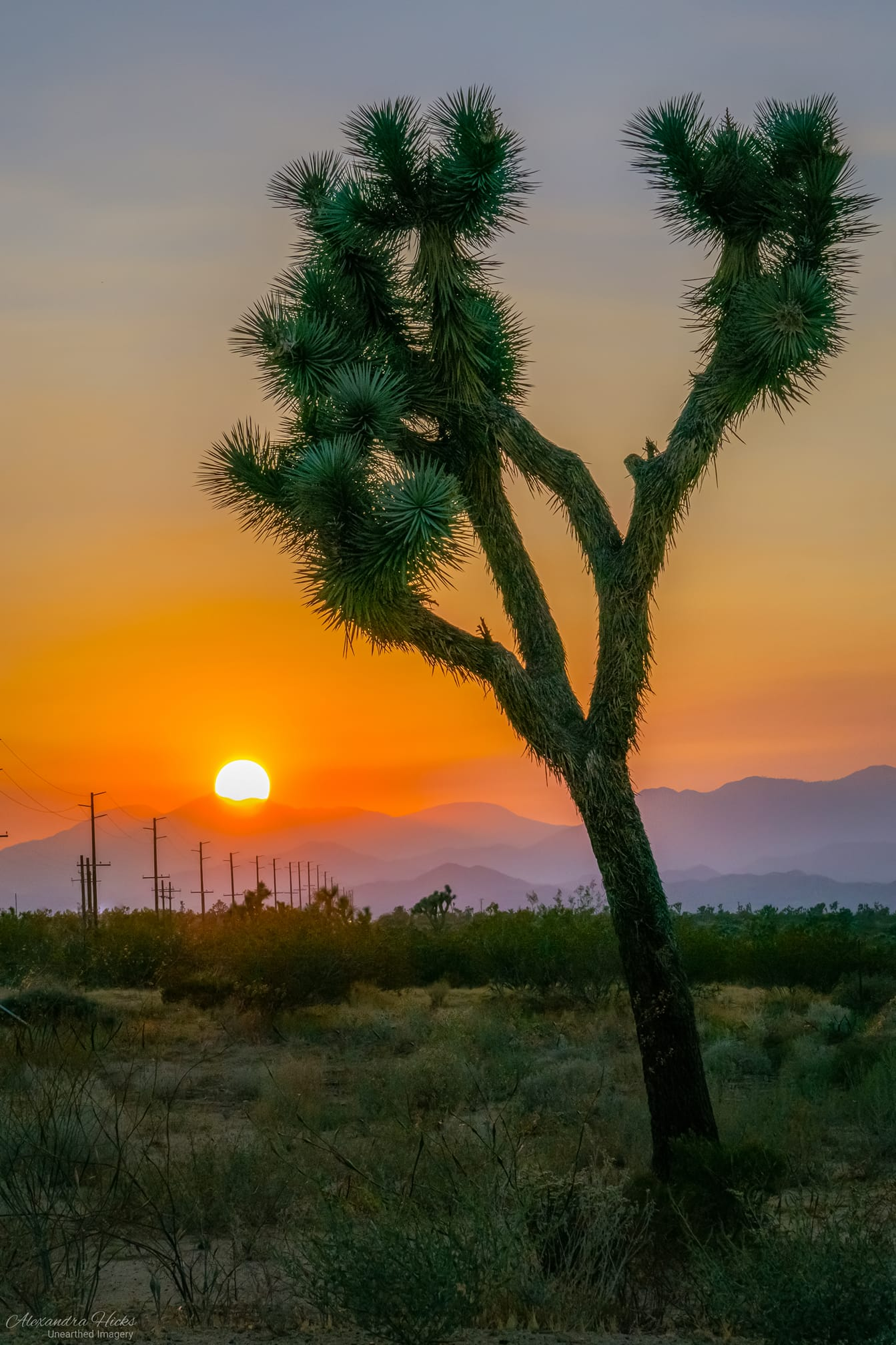Alexandra Hicks' photo of sunset and Joshua Tree