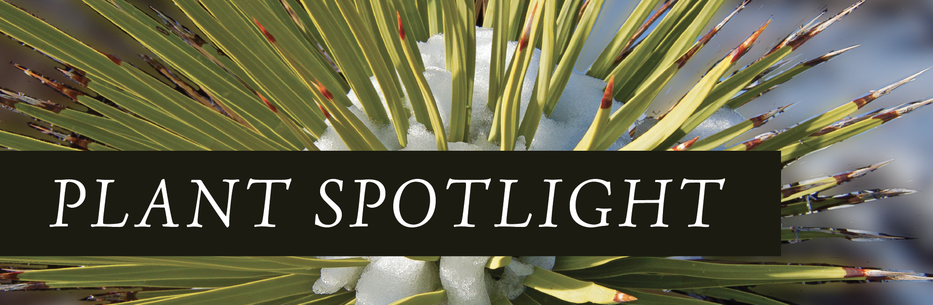 """plant spotlight"" graphic"