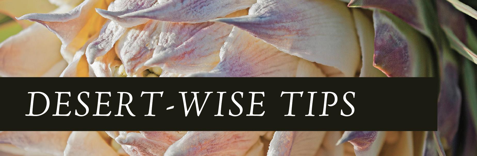 desert wise tips banner