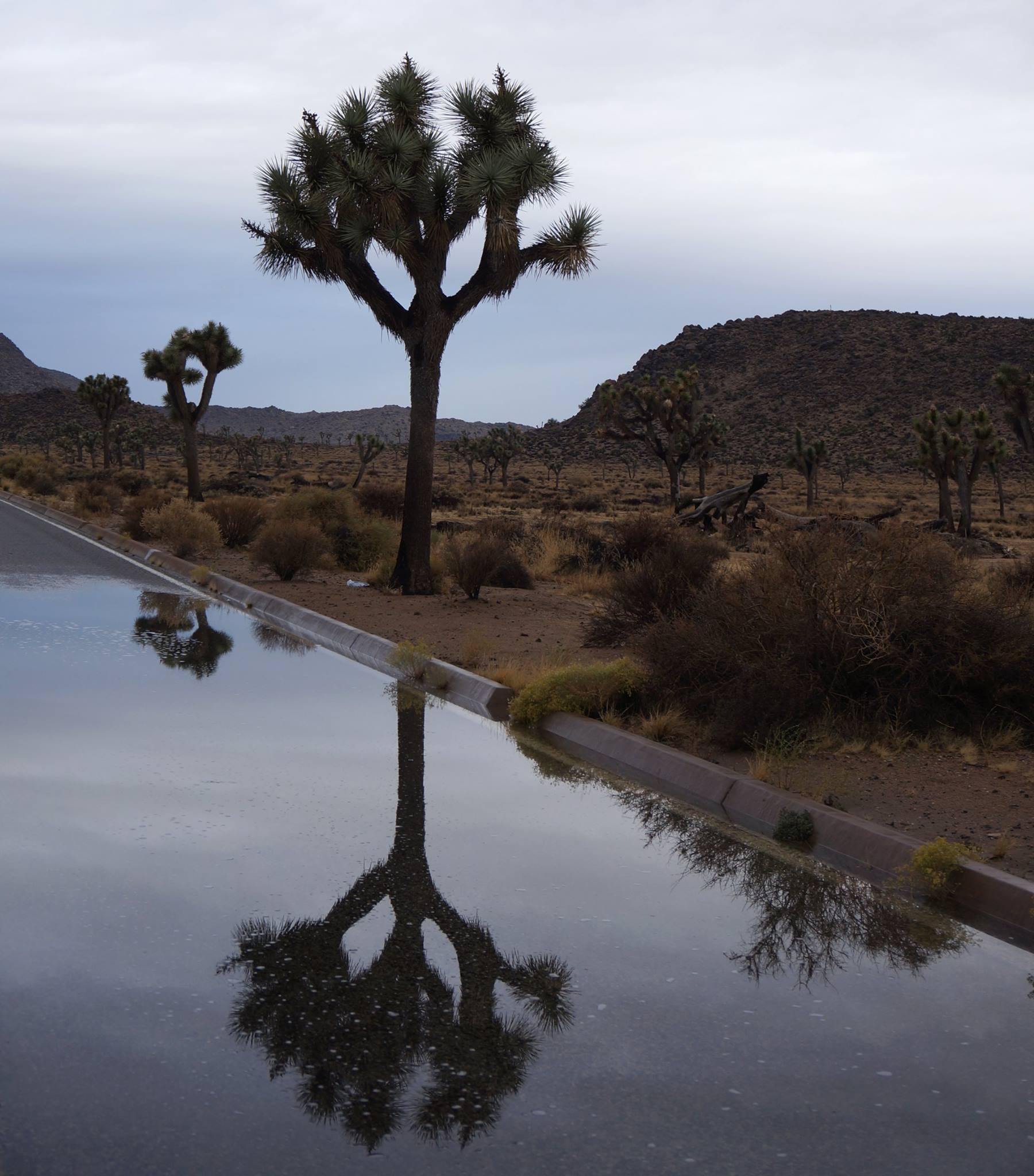 reflected_Joshua_Tree__Kevin_Wong.jpg