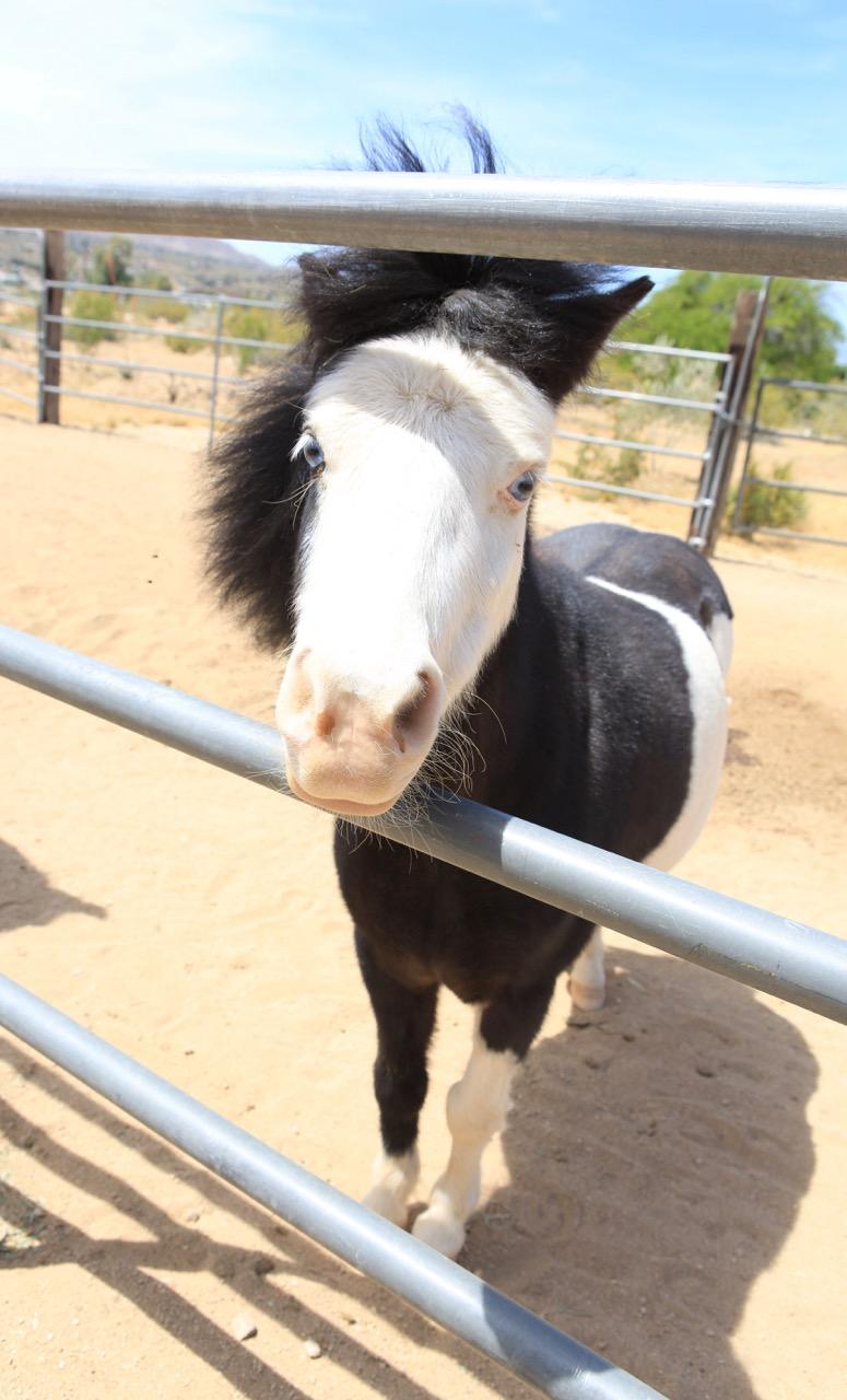 Irwin_horse.jpg