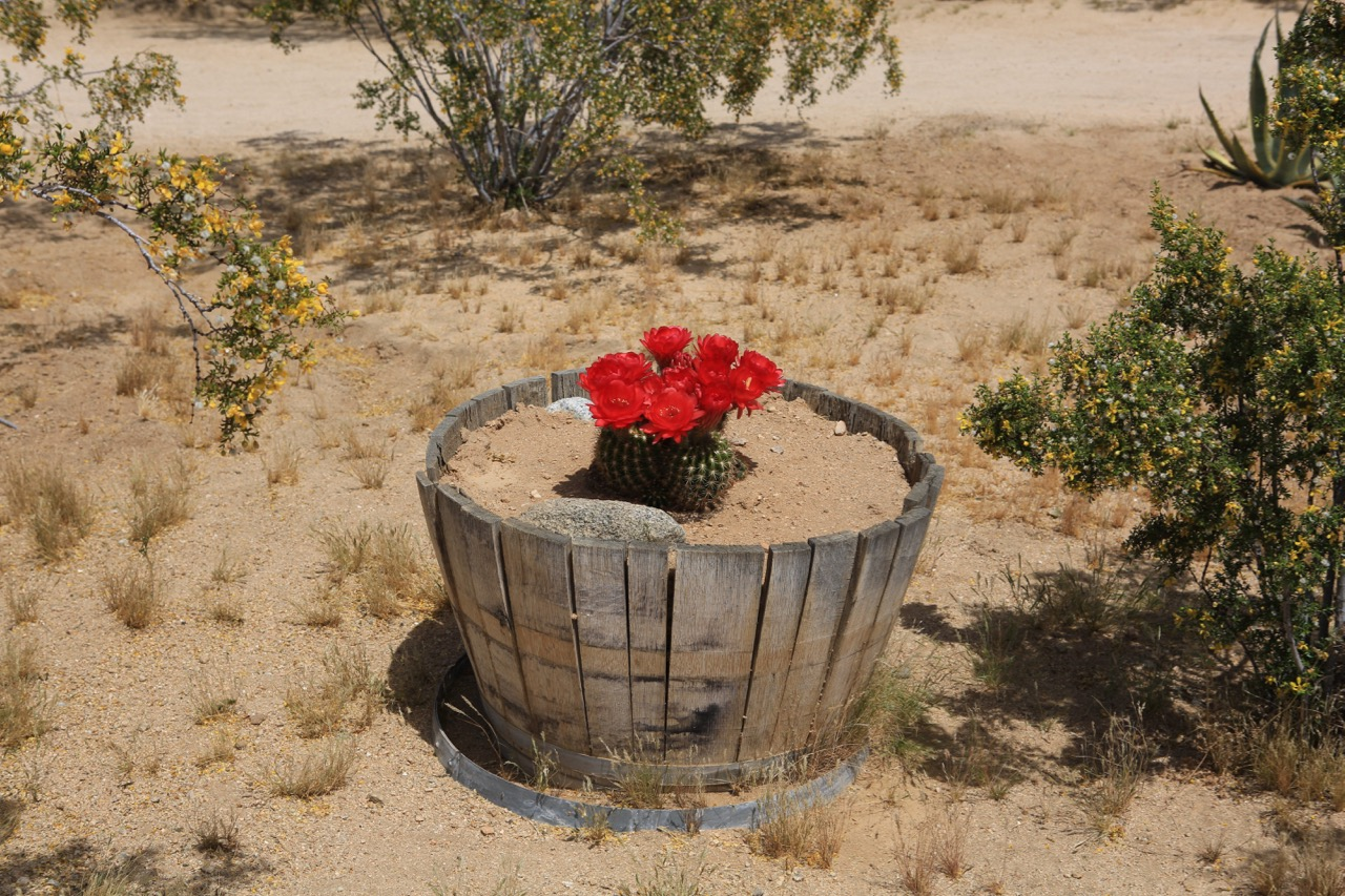Irwin_ODowd_red_cactus.jpg