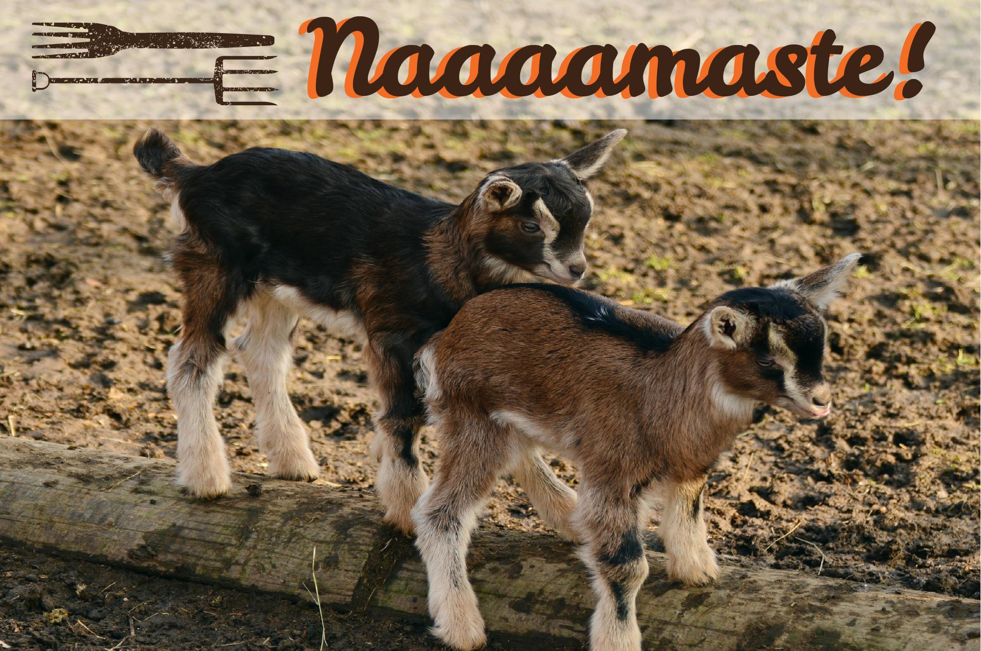 Goat_Yoga-01.png