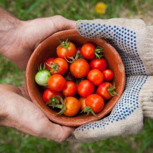 Mat og landbruk