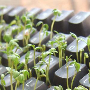 MDG vil skape 150 000 nye, grønne arbeidsplasser