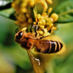 Podkast: Insektene dør!