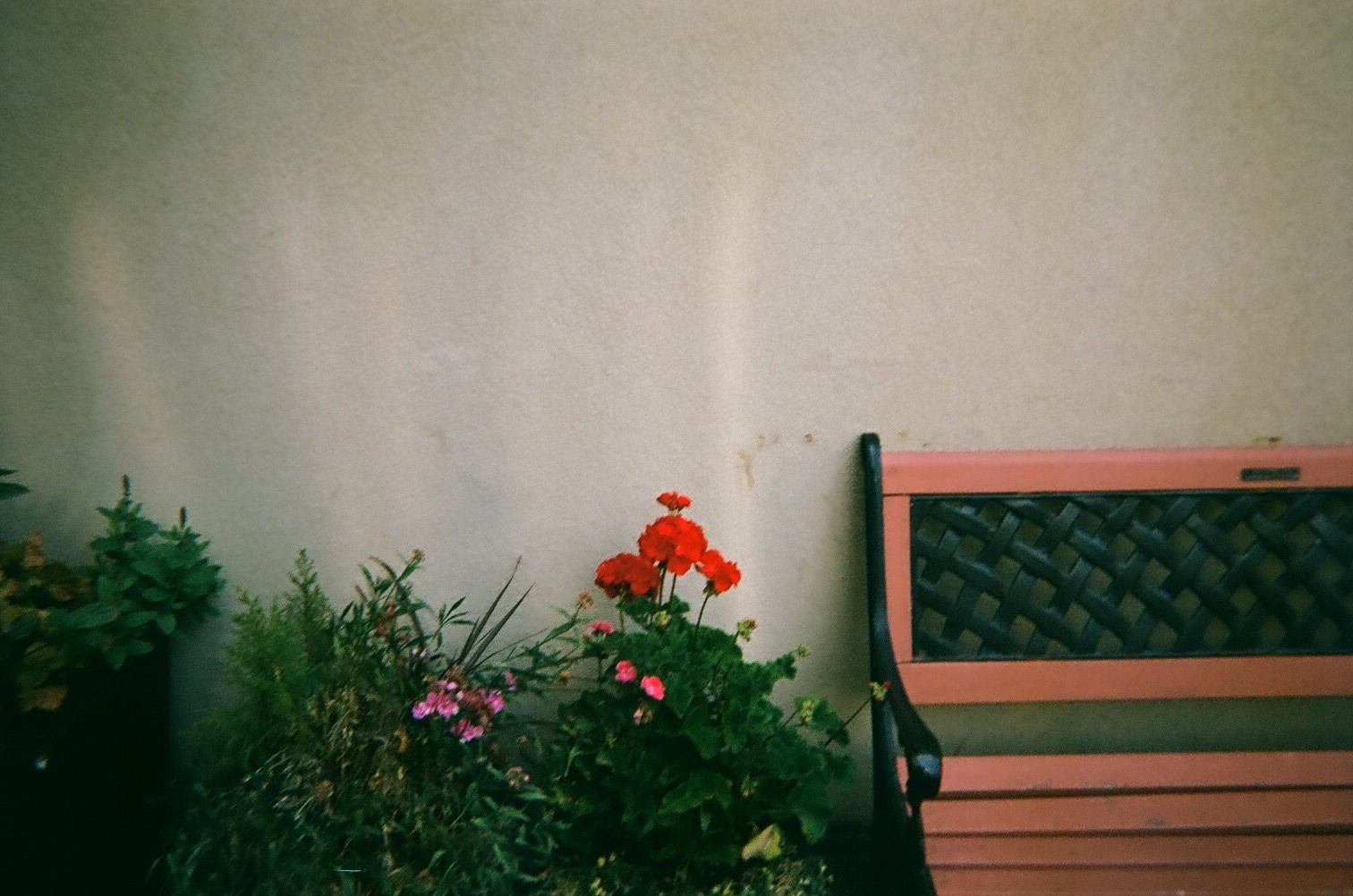 Bench_with_flowers.jpg