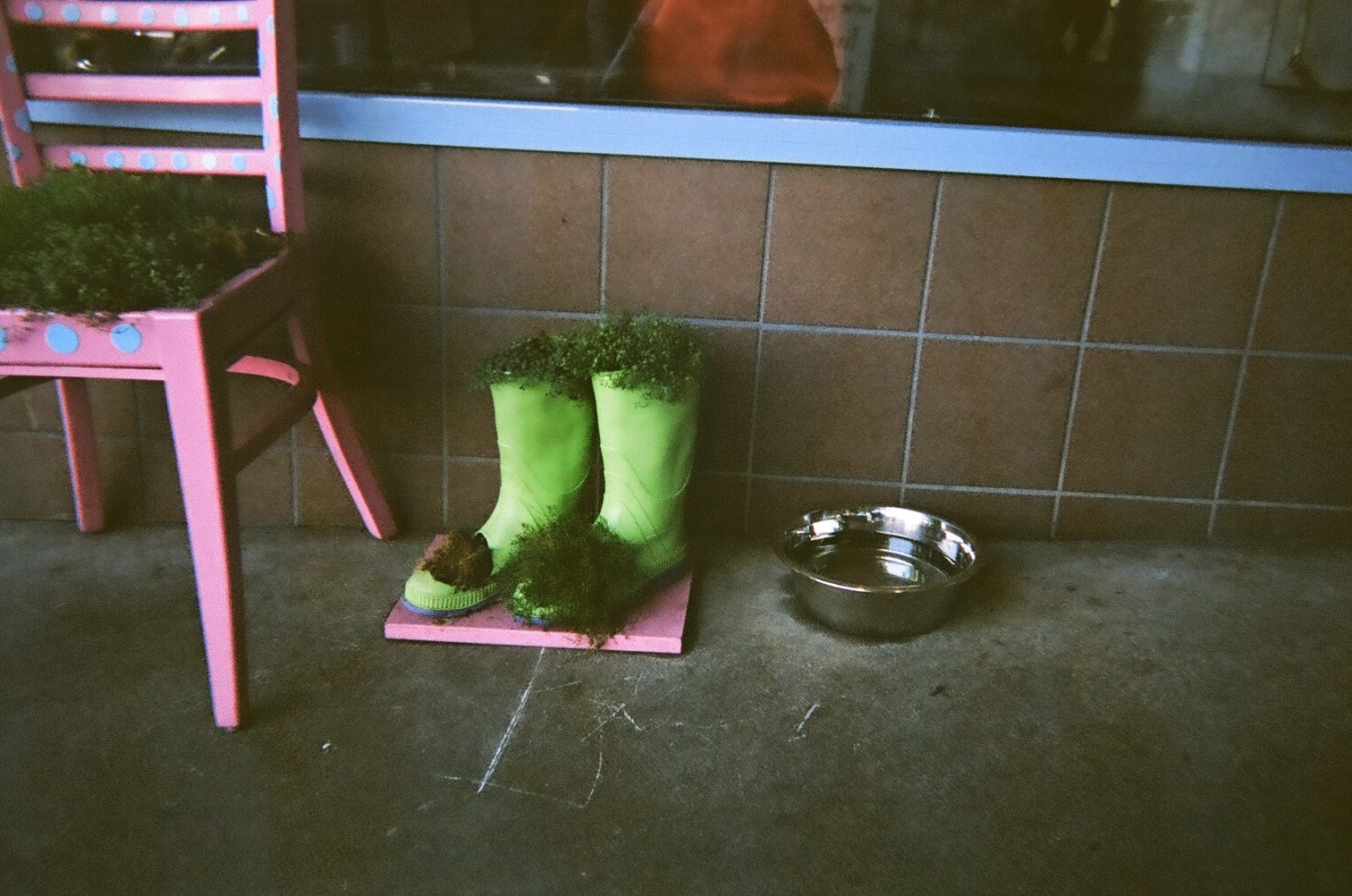 Boots_and_Plants.jpg