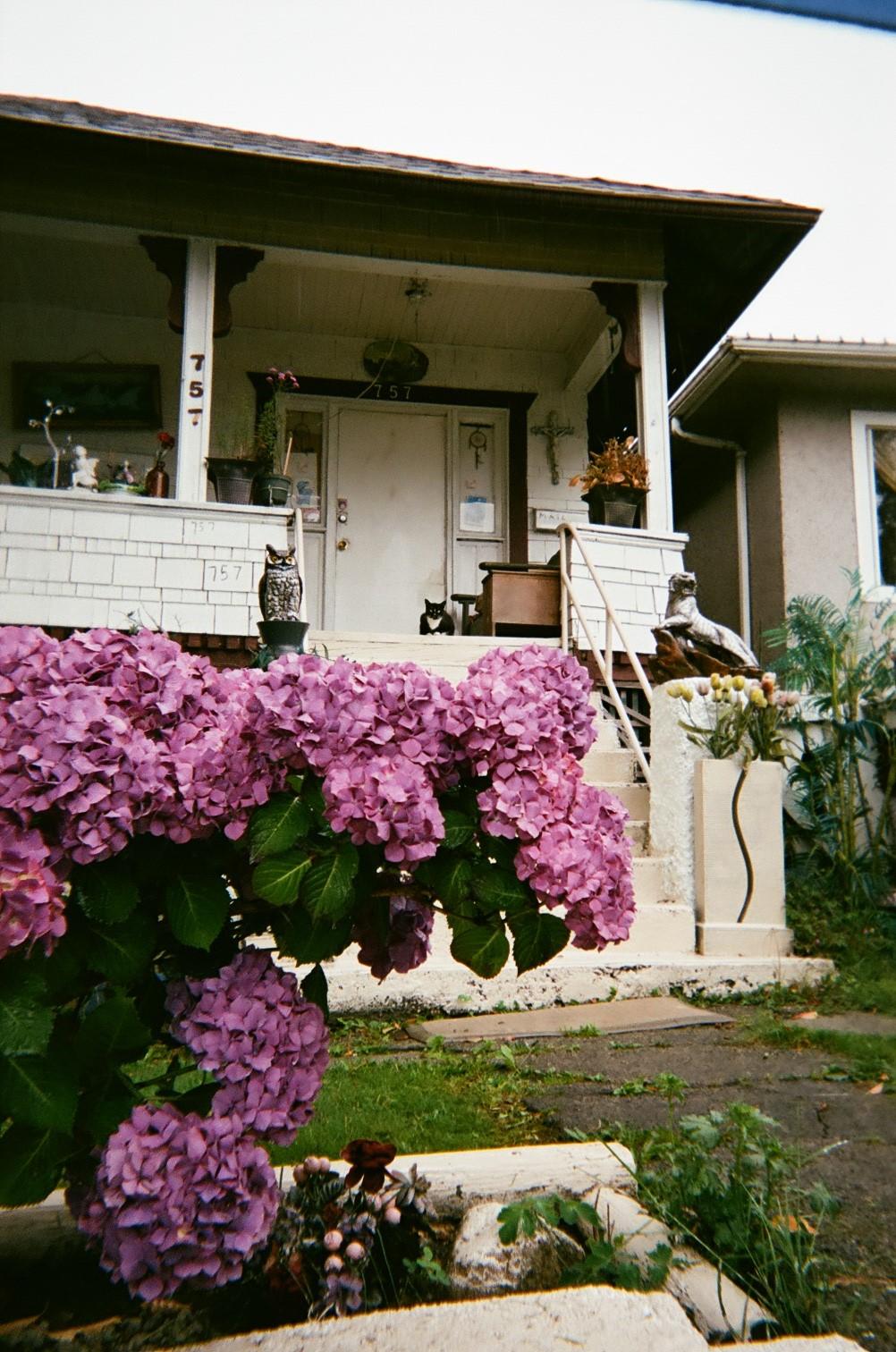 Purple_flowers_on_the_porch.jpg