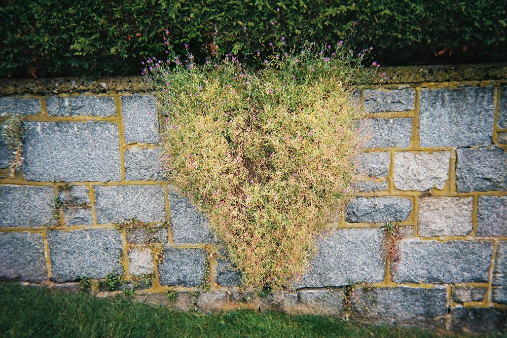 Garden_of_love.jpg