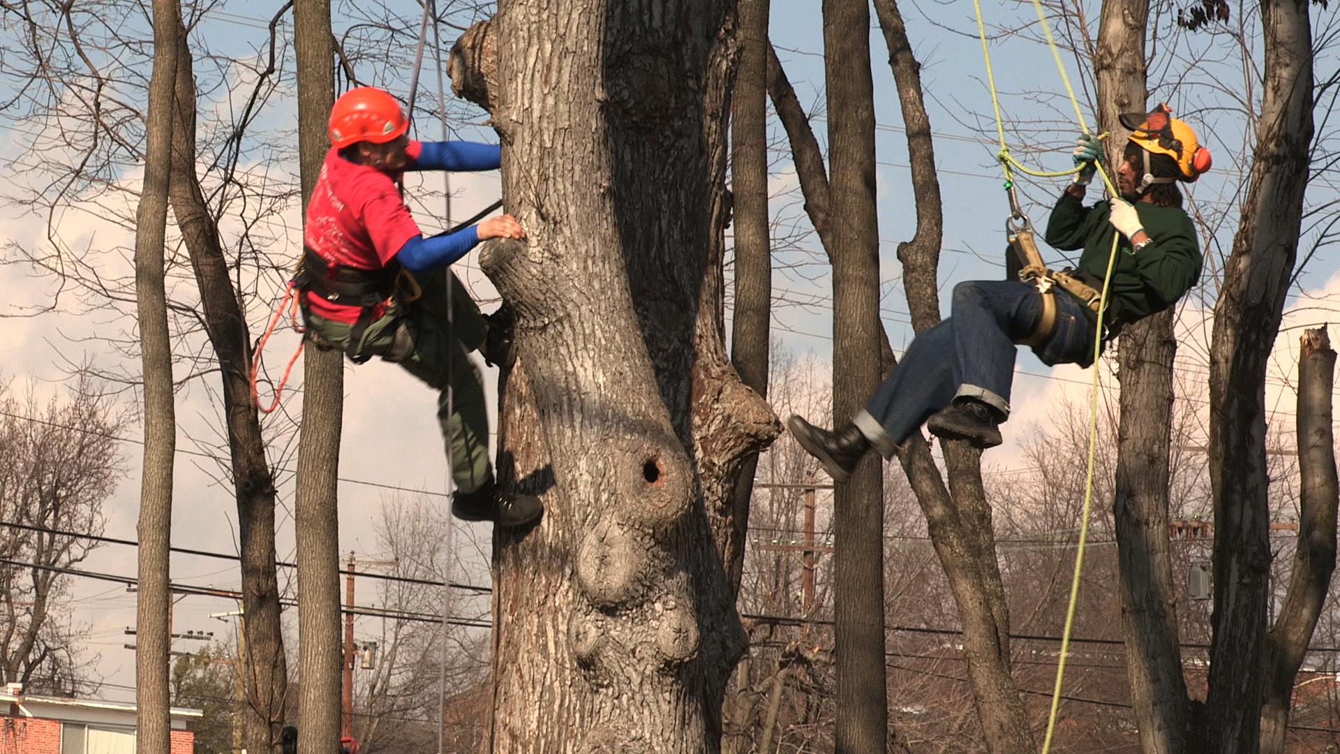 Film_Corps_TreeClimbing.png