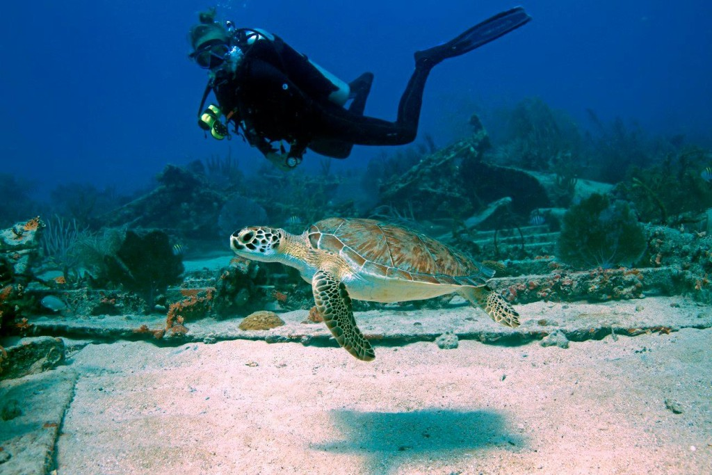 turtle-and-diver-_Evean-1024x683.jpg