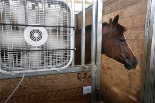 (AP Photo/Seth Perlman, File). FILE – In this July 21, 2016 file photo, Hank, a quarter horse from Paris, Ill., stays close to a fan keeping cool inside a barn at the Illinois State Fair grounds in Springfield, Ill.