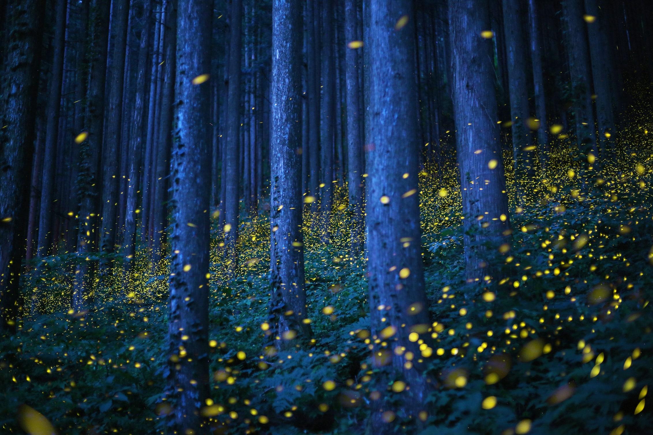 Fireflies by Nomiyama