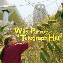 The-Wild-Parrots-of-Telegraph-Hill-210x210.jpg