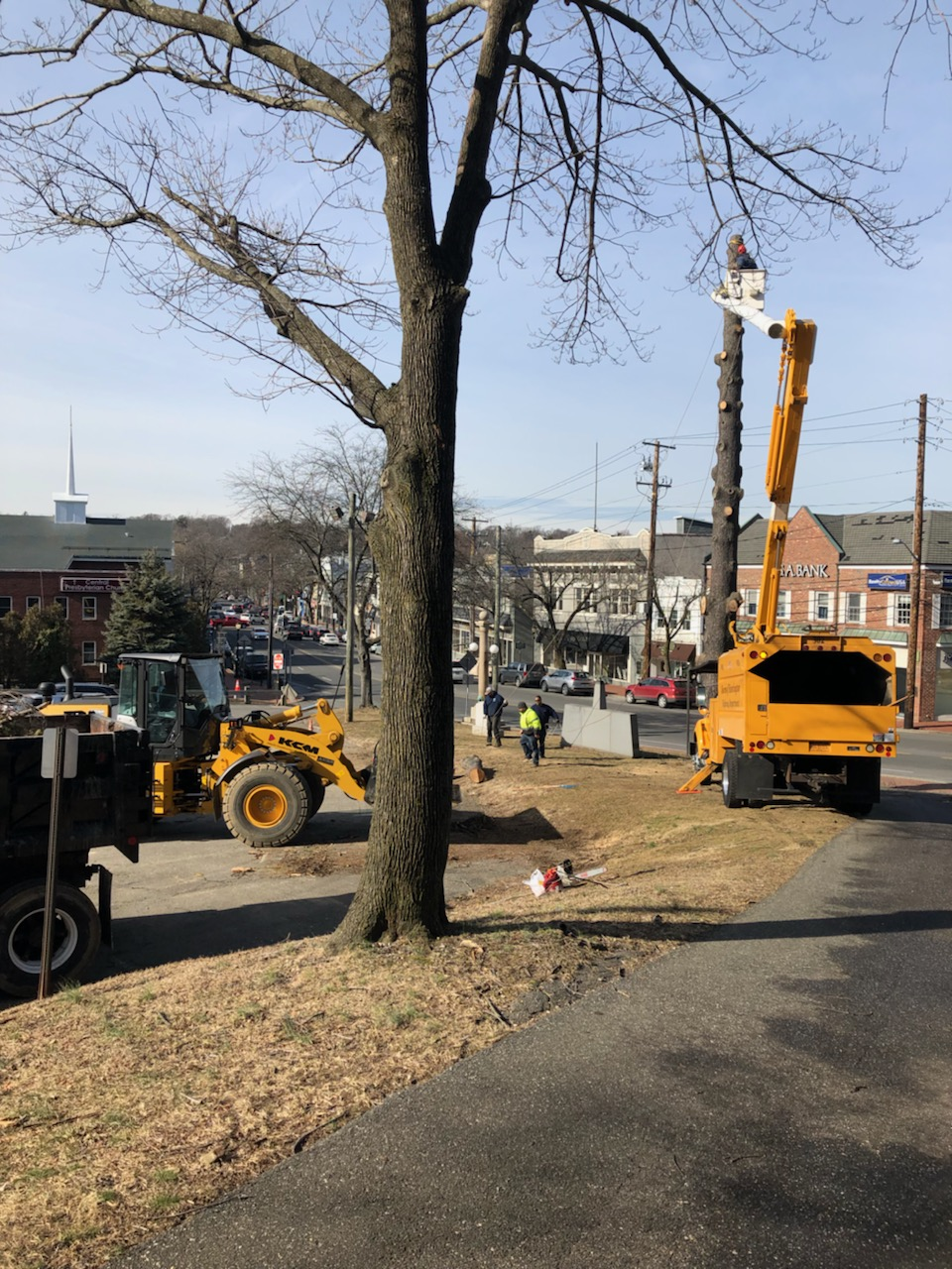 Andre Sorrentino's team removing long-dead trees to ensure Huntington Village is safe for pedestrians and drivers.